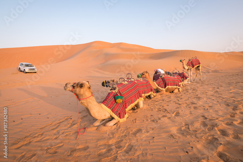 Camel ride in the desert.