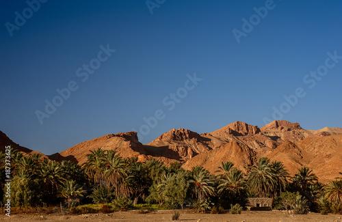 Staande foto Tunesië Palm tree in Tunisia