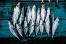 The Market For Marine Fish. St...