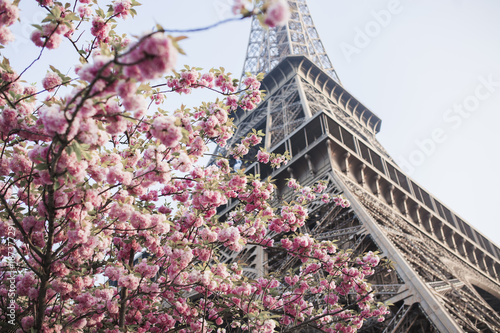 Eiffel Tower and the cherry blossom tree - 187377291