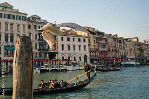 Obraz na plátně Gull Flying over the Canal in Venice