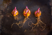 Asiatic Lily Bulbs