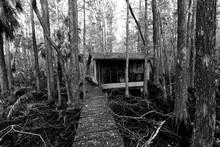 Abandoned Swamp Shack