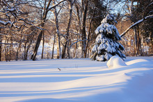 Beautiful Winter Morning Lands...