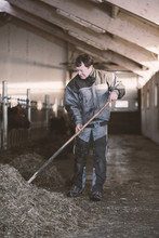 Ranchman Sweeping Hay In Cowshed