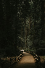 Old Growth Redwood Forest Path