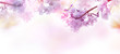 Abstract floral backdrop of purple flowers with soft style.