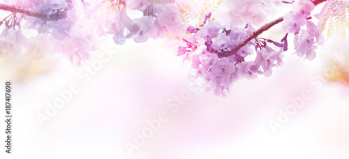 Poster Fleur Abstract floral backdrop of purple flowers with soft style.