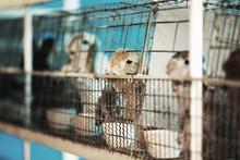 Sad Imprisoned Rabbit Behind M...