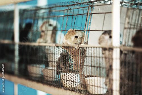 Sad imprisoned rabbit behind metal bar.