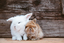 Cute Bunny Siblings Squished T...