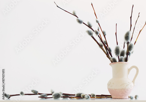 Fototapeta Branches of the pussy willow with flowering bud in vase with water on white back