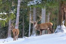 Color Outdoor Wildlife Winter ...
