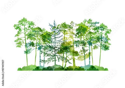 krajobraz-z-drzewami