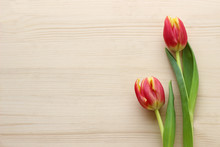 Springtime Background With Tulips