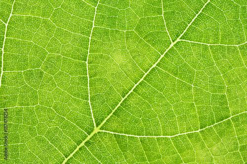 Fotografia, Obraz  Particolare di una foglia verde