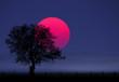 canvas print picture - Sunset Magenta