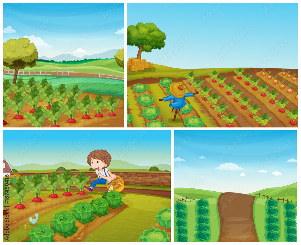 Four farm scenes with vegetables and scarecrow <span>plik: #187480416 | autor: GraphicsRF</span>