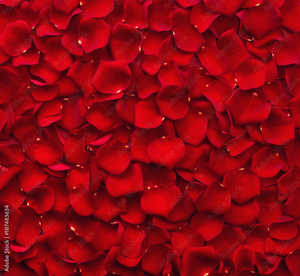 Fototapety, obrazy: Background of red rose petals