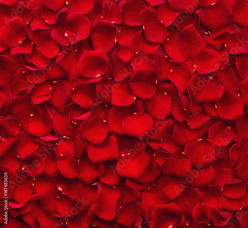 Foto op Canvas Roses Background of red rose petals