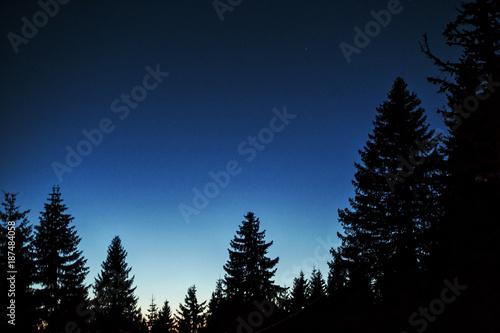 Foto op Aluminium Volle maan Evergreen forest at dusk