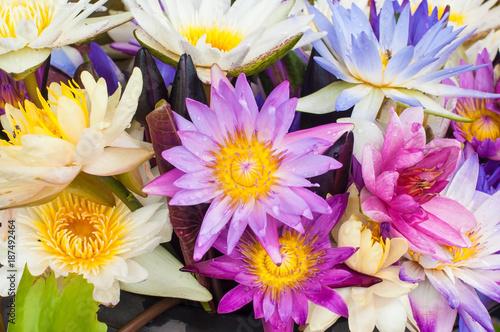 Ingelijste posters Bloemenwinkel Beautiful colorful lotus flowers