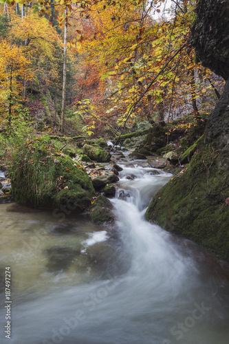 Aluminium Prints Forest river Les Gorges de Covatannaz en automne