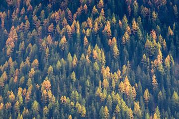 Panel Szklany Podświetlane Do biura Forêt de melèzes en automne.