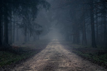 Foggy Road In The Dark, Misty ...