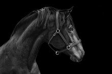 Portrait Of A Horse On A Black...