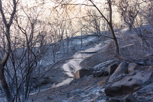 Landscape Damaged By The Thomas Fire Along The Pratt Trail In Ojai, California