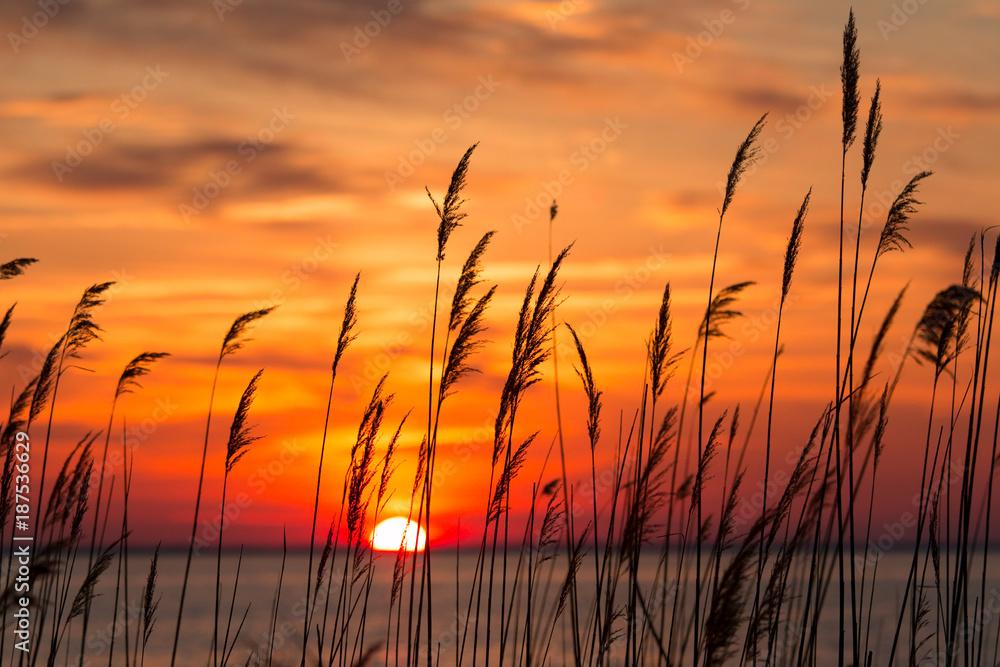 Fototapety, obrazy: Chesapeake Bay Sunrise