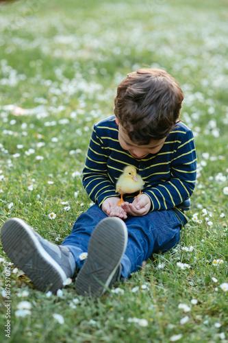 Little boy holding a duckling Poster