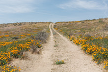 A Dirt Road Through A Field Of...