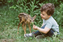 Little Boy Playing With Fawn