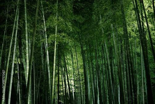 Foto op Plexiglas Bamboe 竹林のライトアップ