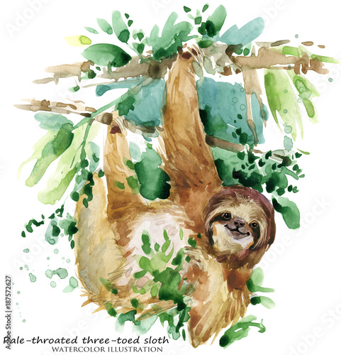 Watercolor sloth illustration. tropical animal Canvas Print