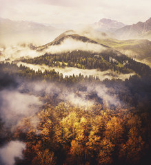 Fototapeta Popularne Photo Collage: Wilderness Landscape. Gold Leafy Trees, Green Hill with Coniferous Trees and Big Mountain. Misty Weather.