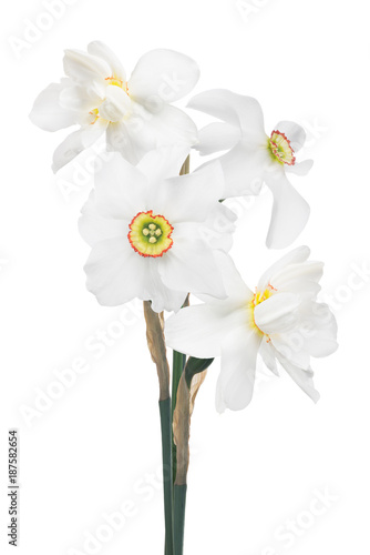 Deurstickers Narcis bunch of white narcissus four flowers