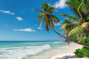 Palm trees on exotic beach in tropical island.  Summer holiday and vacation concept background.