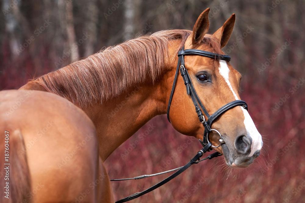 Fototapeta Russian Don horse