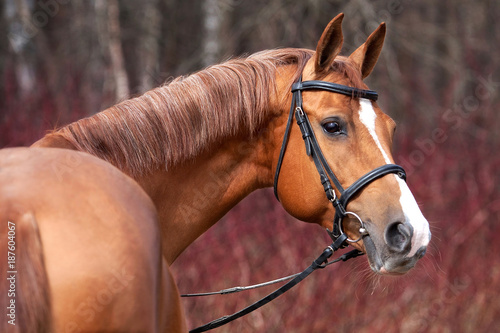 Foto op Canvas Paarden Russian Don horse