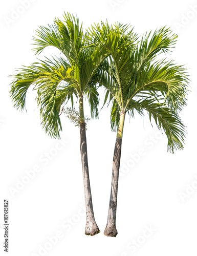 Foto  Isolated palm tree on white background