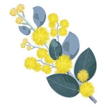 Australian Wattle Flower Close...