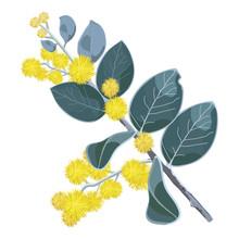 Golden Flowering Wattletree Ve...