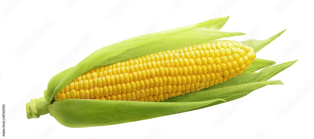Fotografia Single ear of corn isolated on white background