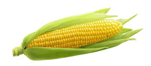 Single Ear Of Corn Isolated On...