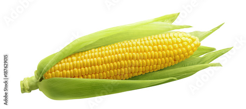 Poster Graine, aromate Single ear of corn isolated on white background