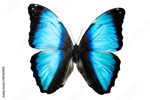 In de dag Vlinder бабочка синего цвета Mariposa Morpho изолировано на белом