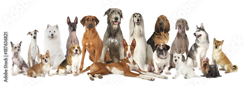 Foto  Group of various kind of purebred dogs